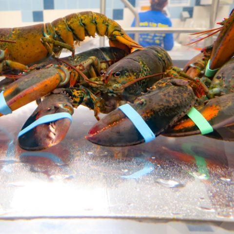 lobster-tank
